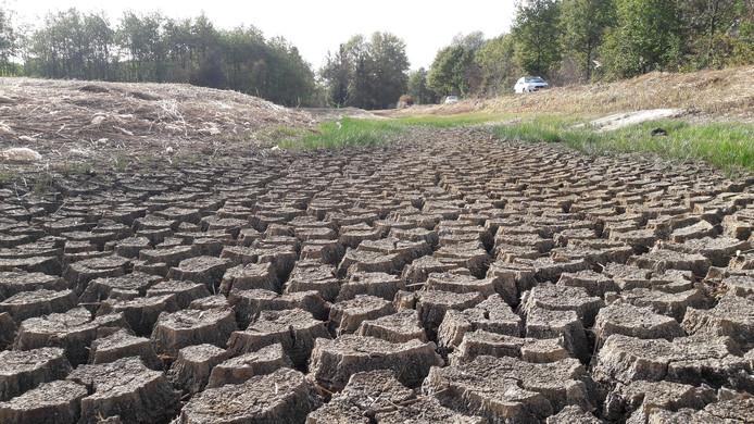 Een pas aangelegd wateropvanggebied in het Ulvenhoutse bos is drooggevallen.