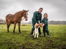 Jong boerengezin uit Son en Breugel wil duizenden euro's niet missen door één regeltje en stapt naar de rechter