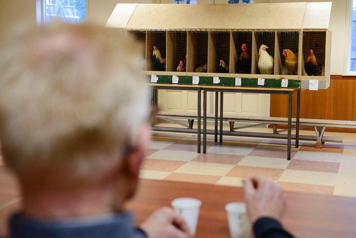 Een jurylid tijdens de hanenkraaiwedstrijd in Neede.