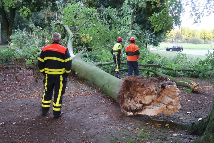 Vrouw kan net opzij springen voor enorme vallende tak in Oosterhout