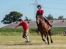Oren naar voren en gáán bij horseboarding Lierderholthuis