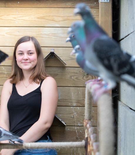 1.300 pigeons ne sont pas rentrés le week-end passé, quel est ce mystère?