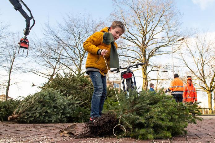 Kinderen slepen de kerstbomen woensdag naar een van de verzamelplekken in Nijverdal: de Kruidenwijk.