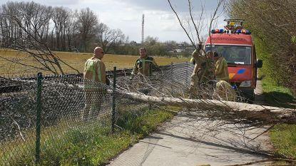Eerste stormschade: boom dwars over fietspad en spoorlijn L82