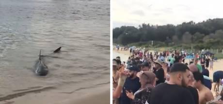 Un requin filmé au bord d'une plage bondée de Sydney