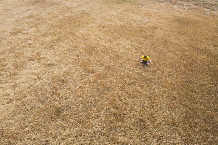 Akkerbouwer Martijn Vorkink bekijkt zijn perceel met verdroogd gras.