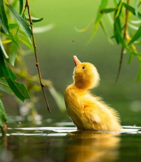 Les plus belles photos d'oiseaux finalistes du Bird Photographer of the Year 2021