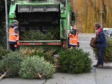 Kerstboominzameling in Land van Cuijk tussen 6 en 17 januari
