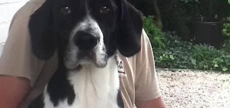 Tot tien maanden cel voor jagers die honden vergiftigen