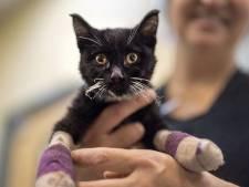 Verbrande huisdieren in Californië krijgen revolutionaire vissenhuid-therapie