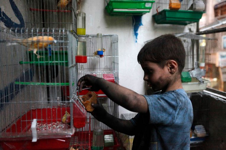 Issa, 10 years old, feeds his pet bird at home in Aleppo, September 7, 2013. Issa works with his father in a weapons factory of the Free Syrian Army for ten hours every day except on Fridays. REUTERS/Hamid Khatib (SYRIA - Tags: POLITICS CONFLICT CIVIL UNREST ANIMALS) Beeld REUTERS