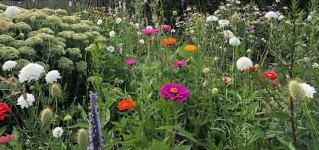 Gestreste spinazie en bruine rozen: hoe loods je de tuin door dit wisselvallige weer heen?