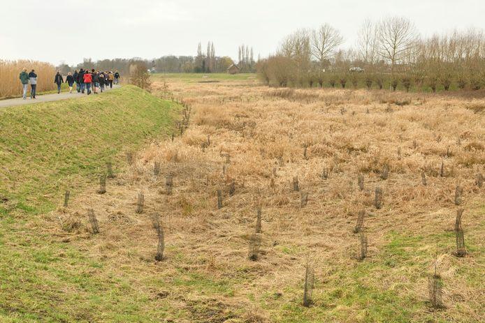 In de Polder van Lier staan er sinds kort 340 nieuwe zwarte elzen.