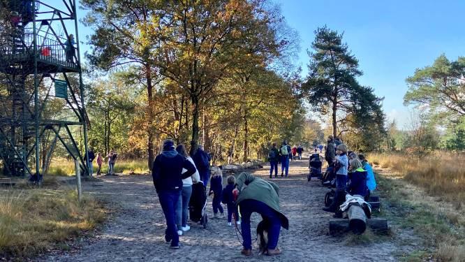 De Kalmthoutse Heide is dezer dagen drukker dan de Meir: honderden wandelaars overrompelen natuurgebied