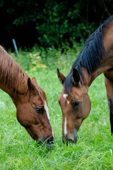 Varssevelder (31) ontploft na horen strafeis voor mishandelen paard: 'Ik ben gek met paarden'