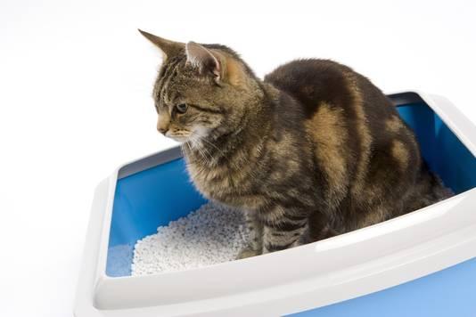 Hou je kat in huis en sluit de kattenbak altijd af.