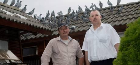 Drama voor duivenmelkers: beschermde valk eet alle duiven op