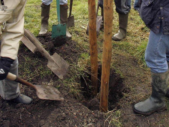 Het streven is, in vier jaar tijd 380.000 boompjes te planten in Zeeland.