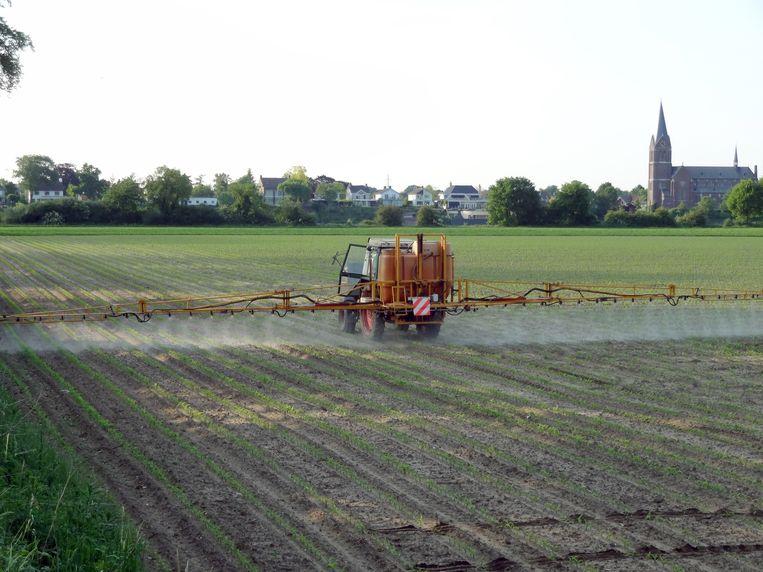 Pesticiden op een maïsveld in Limburg.  Beeld Trouw