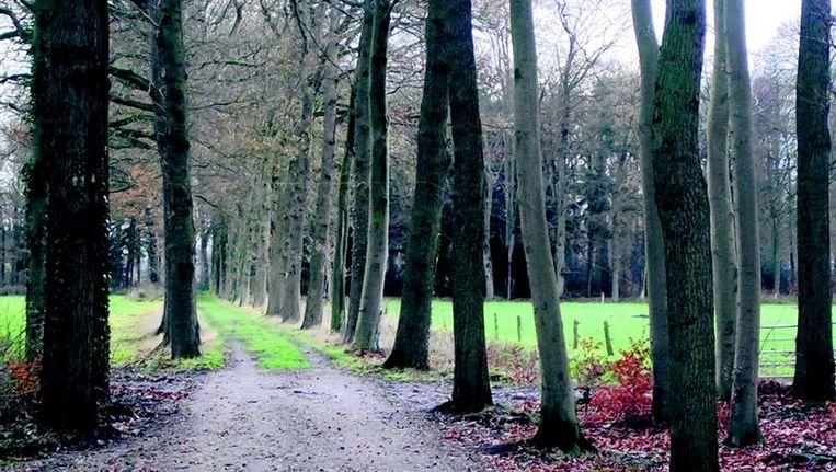 Landgoed Spyckerbosch, bij Blokland. Beeld