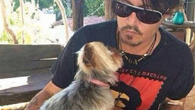 Honden Johnny Depp met privévliegtuig uit Australië gered