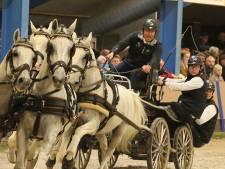 Paardenwereld in rep en roer om dodelijk virus: 'Het ergste wat je kan overkomen'