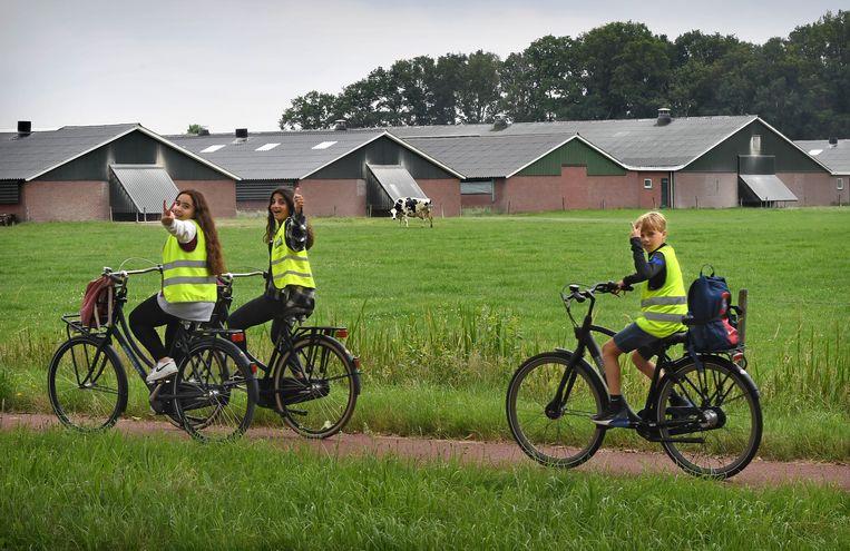 Intensieve veehouderij bij Renswoude in de Gelderse Vallei. Beeld Marcel van den Bergh / de Volkskrant